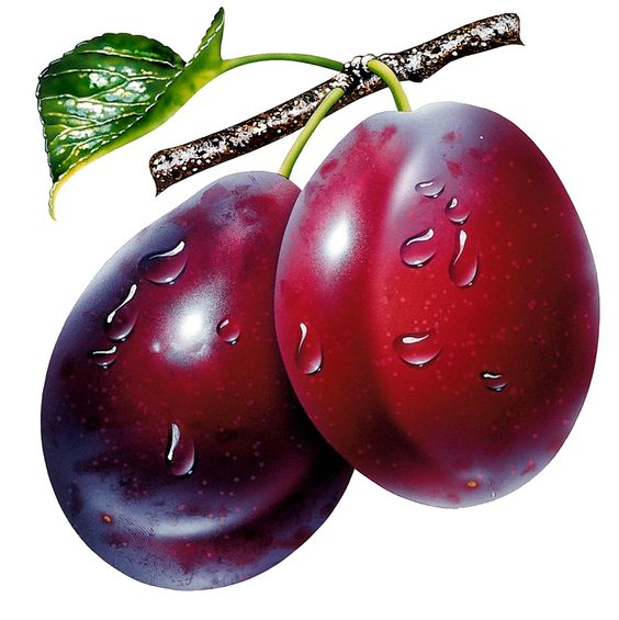 Prunes Clipart Picture.