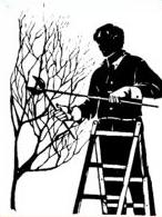 Free Pruning Trees Clipart.