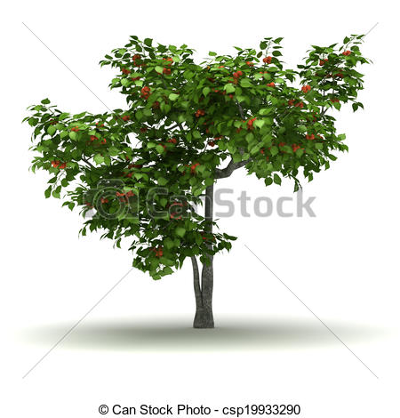 Stock Illustration of Single Apricot Tree.