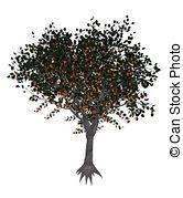 Prunus armeniaca Illustrations and Stock Art. 10 Prunus armeniaca.