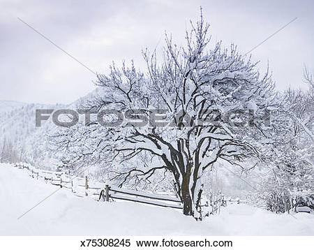 Stock Image of Snow.