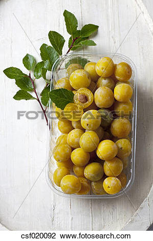 Stock Photo of Mirabelles (Prunus domestica subsp. syriaca) in a.