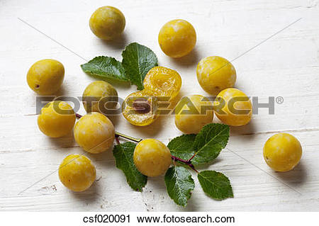 Stock Photography of Mirabelles (Prunus domestica subsp. syriaca.