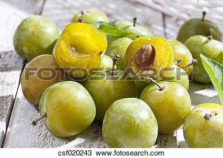 Stock Photo of Sliced and whole greengages (Prunus domestica subsp.