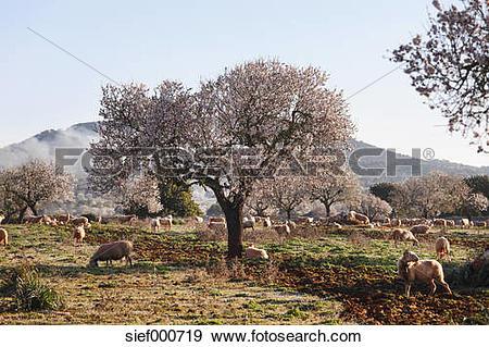 Stock Photograph of Spain, Balearic Islands, Majorca, Santanyi.