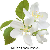 Prunus serrulata Clip Art Vector Graphics. 30 Prunus serrulata EPS.
