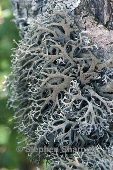 1000+ images about look down, funghi moss lichen on Pinterest.