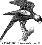 Psittacidae Clipart Royalty Free. 8 psittacidae clip art vector.