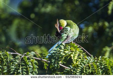 Psittacidae Stock Photos, Royalty.