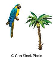 Psittacidae Illustrations and Stock Art. 15 Psittacidae.