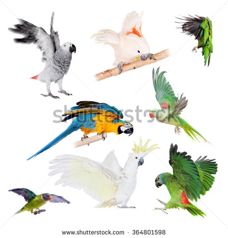 Psittaciformes Stock Photos, Royalty.