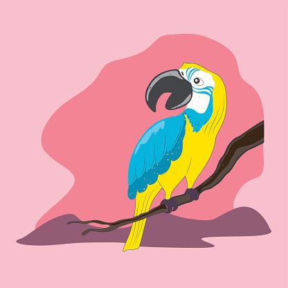 Psittaciformes Clip Art, Vector Images & Illustrations.