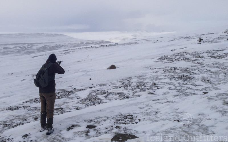Ptarmigan hunting in Iceland.