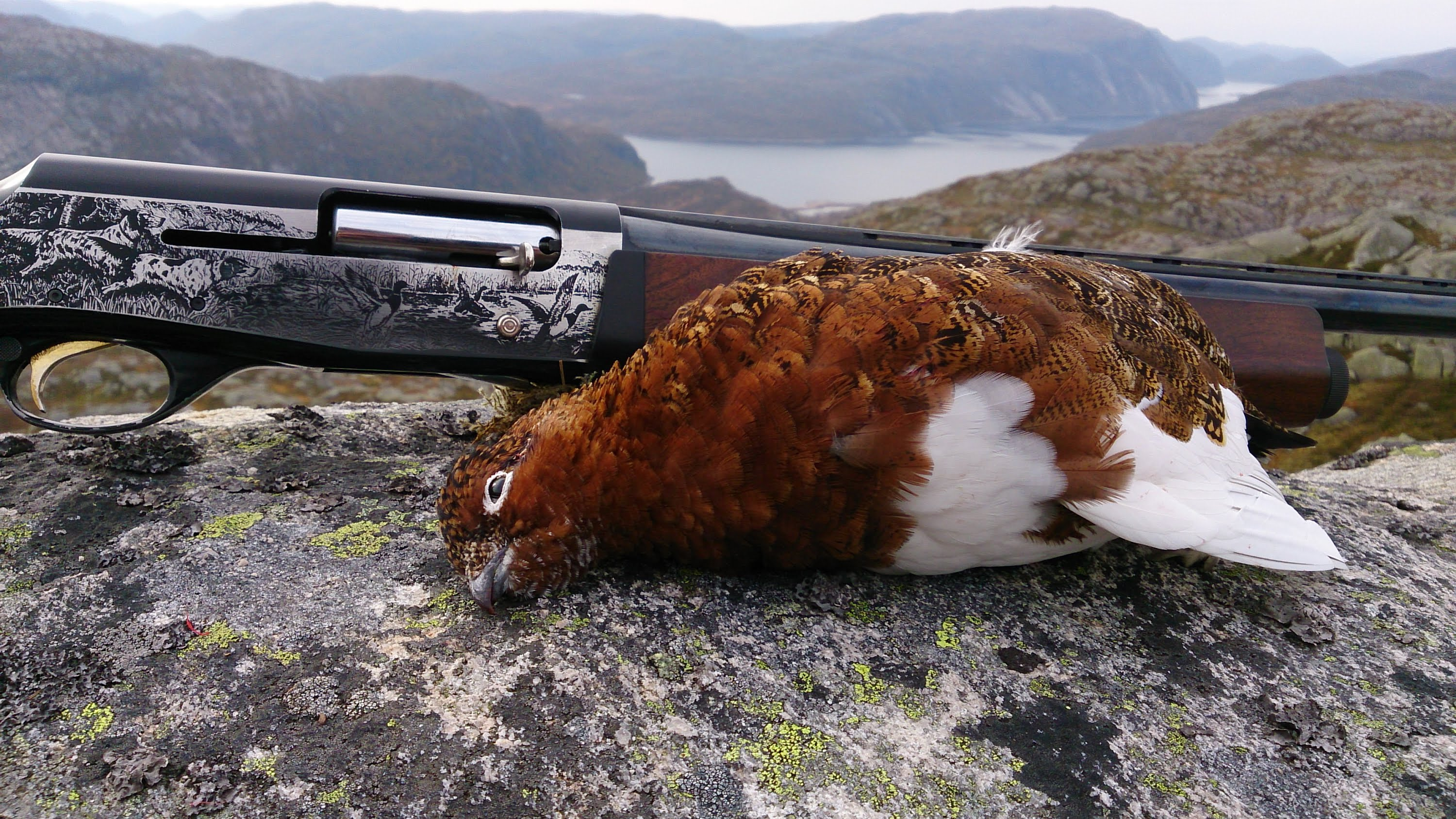 Rypejakt 2014 / Ptarmigan Hunting / Grouse Hunting 2014.
