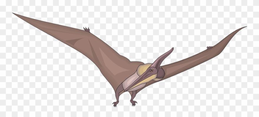 Pteranodon Clipart.
