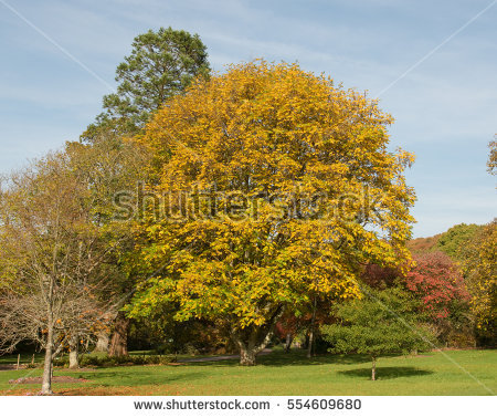 Autumn English Colour Parkland Stock Photos, Royalty.