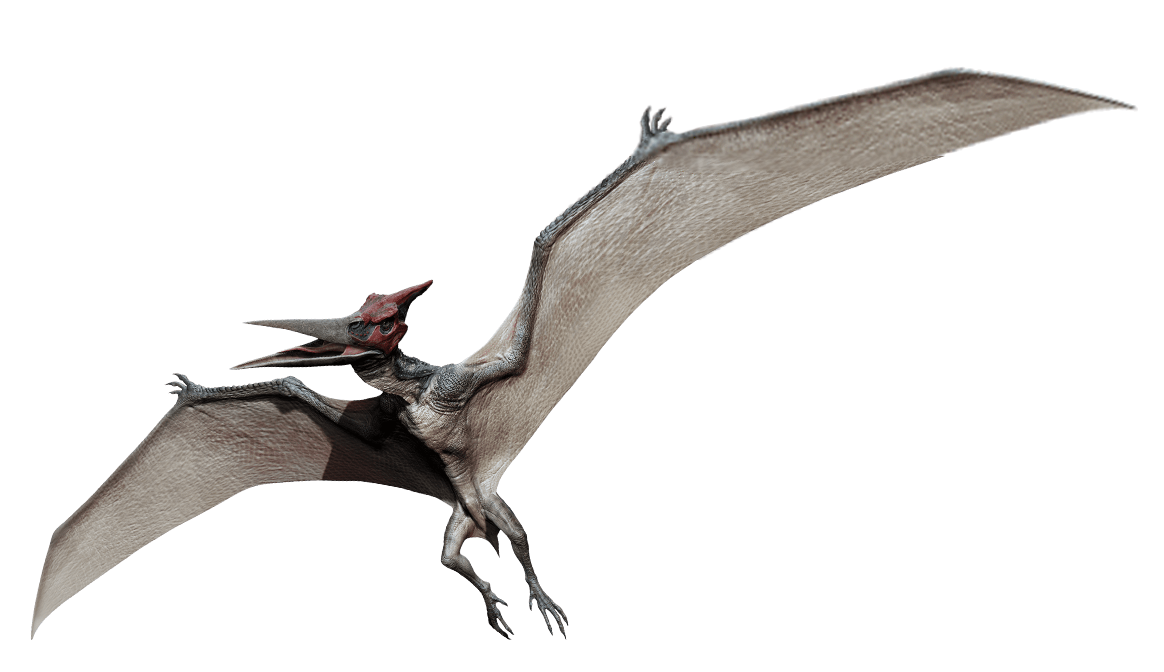Download Pterosaurs PNG HD.