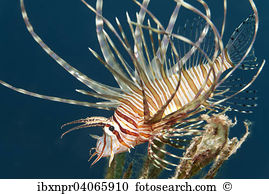 Pteroinae Stock Photo Images. 65 pteroinae royalty free pictures.