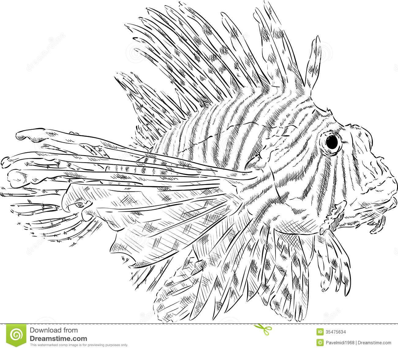 Pterois Volitans Stock Images.