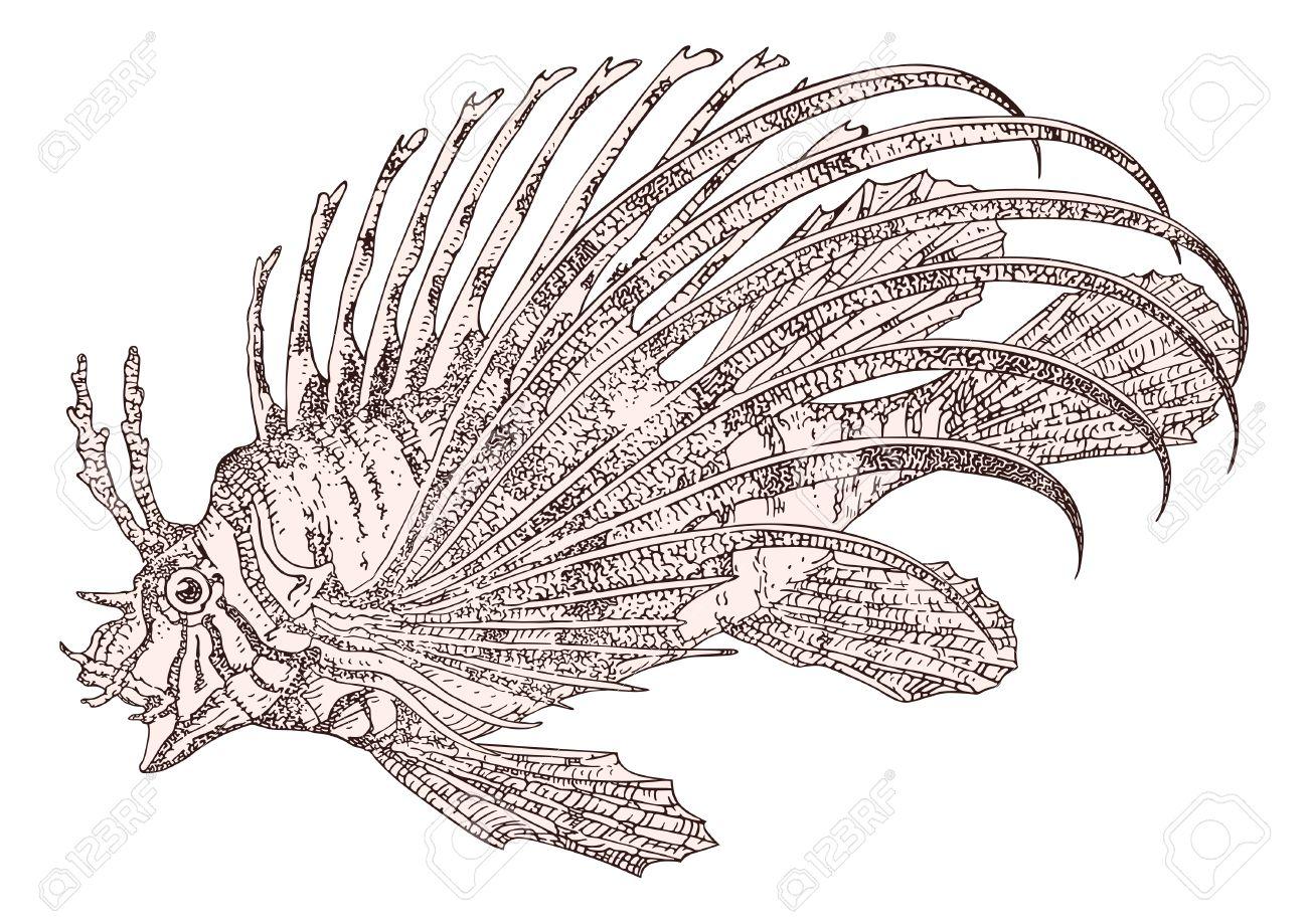 Fish Zebra Pterois Volitans Vector Royalty Free Cliparts, Vectors.