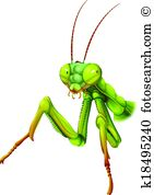Pterygota Clipart EPS Images. 18 pterygota clip art vector.
