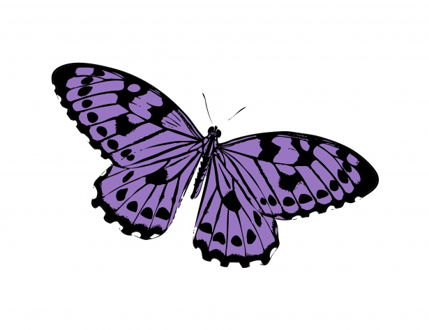 Butterfly Purple Clipart Free Stock Photo.