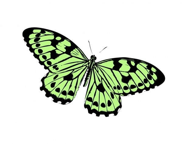 Butterfly Clipart Illustration Free Stock Photo.