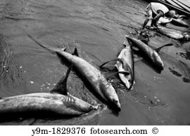 Bycatch Stock Photo Images. 51 bycatch royalty free pictures and.