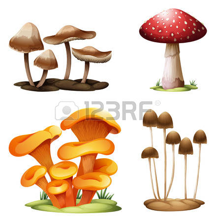 142 Puffball Mushroom Stock Illustrations, Cliparts And Royalty.