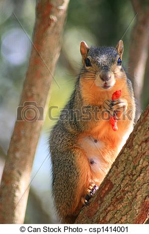 Stock Photography of Squirrel Holding Cheese Puff.