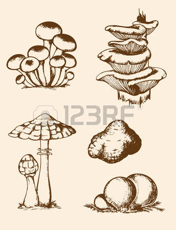 136 Puffball Mushroom Stock Illustrations, Cliparts And Royalty.