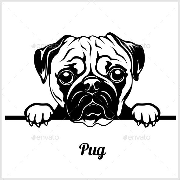 Pug Peeking Dog Face.