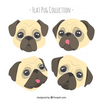 Pug Vectors, Photos and PSD files.