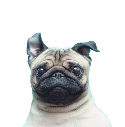 pug png.