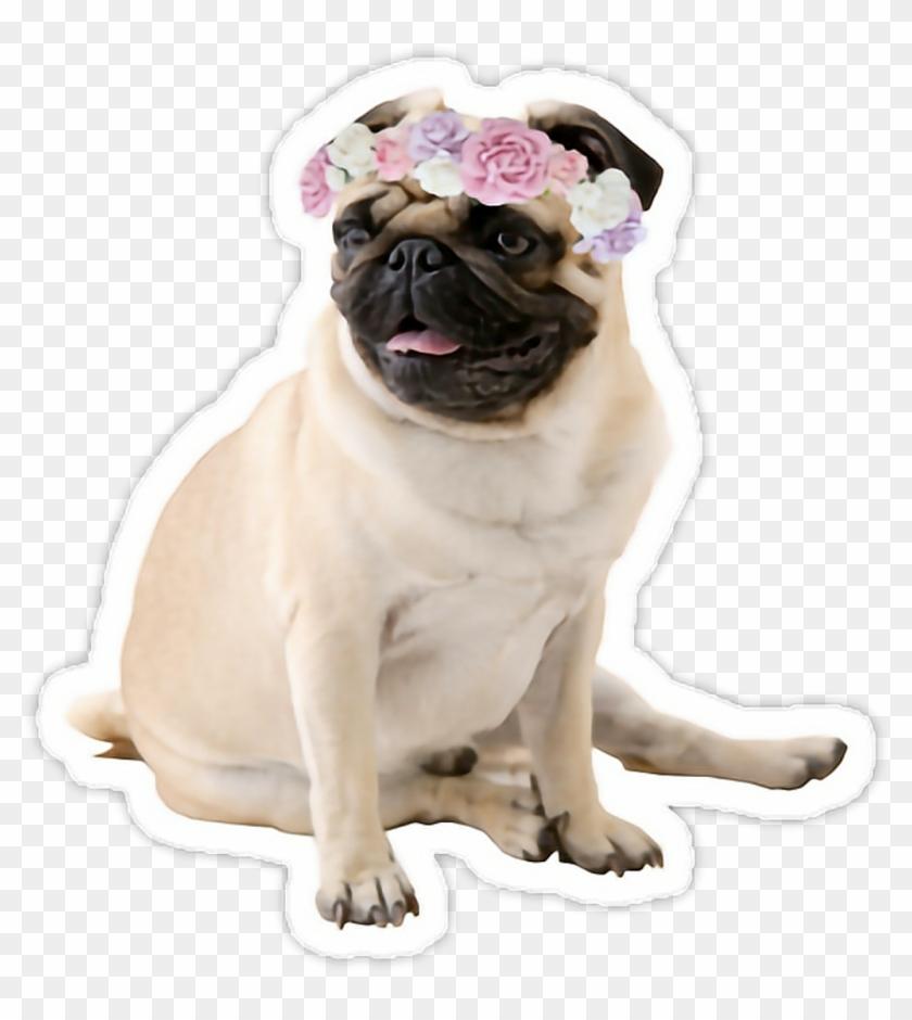Tumblr Sweet Mops Mopspug Dog Pug.