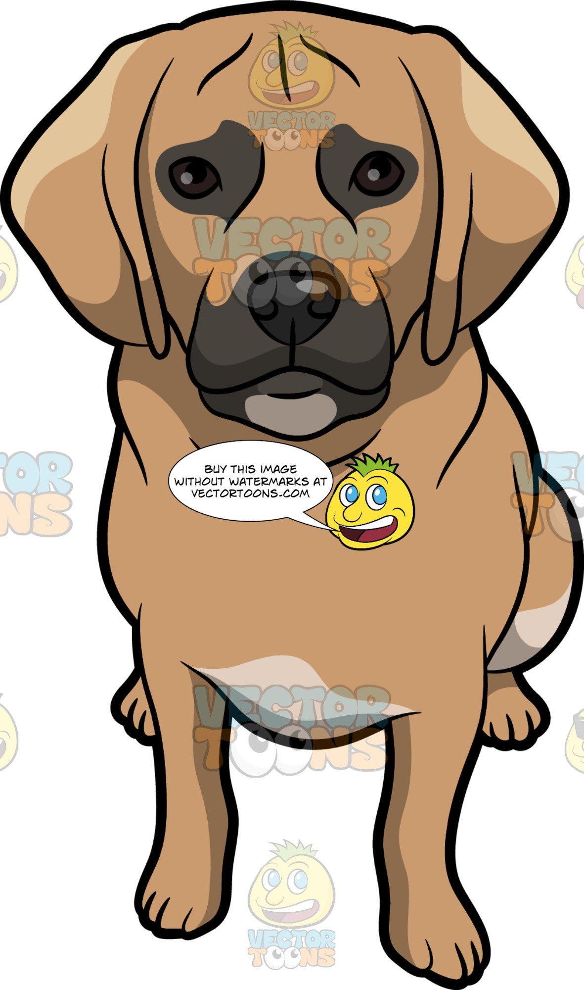 A Curious Puggle Dog.