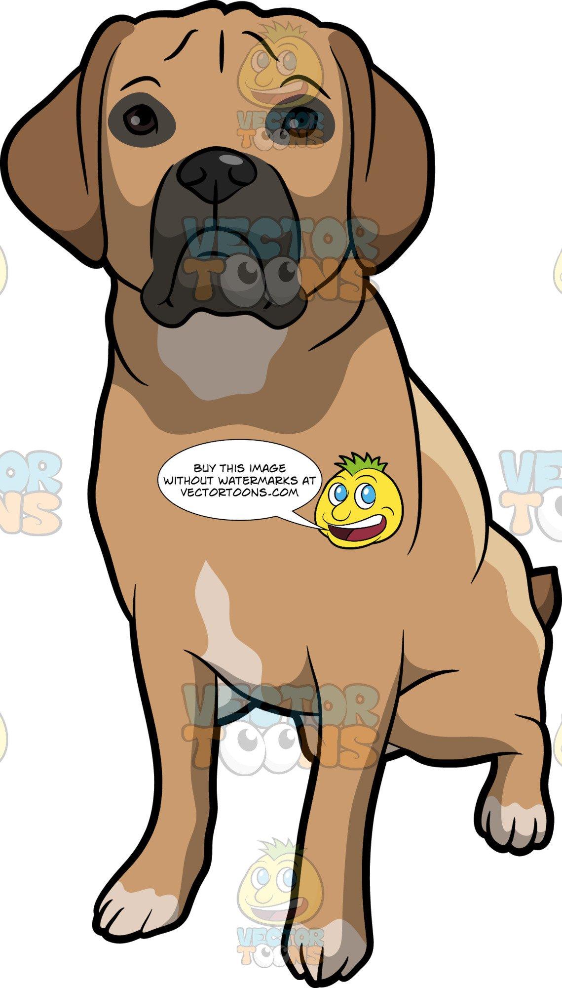 An Alerted Puggle Dog.