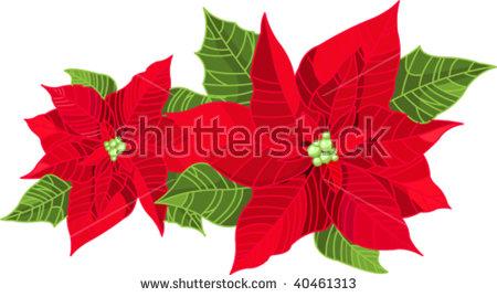 Pulcherrima Euphorbia Stock Vectors & Vector Clip Art.