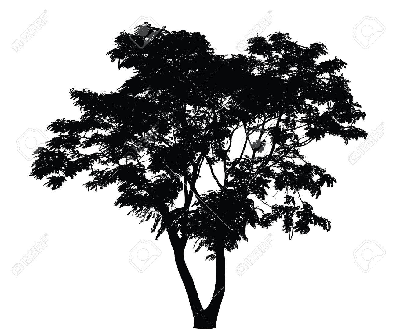 Tree Silhouette : Caesalpinia Pulcherrima Royalty Free Cliparts.