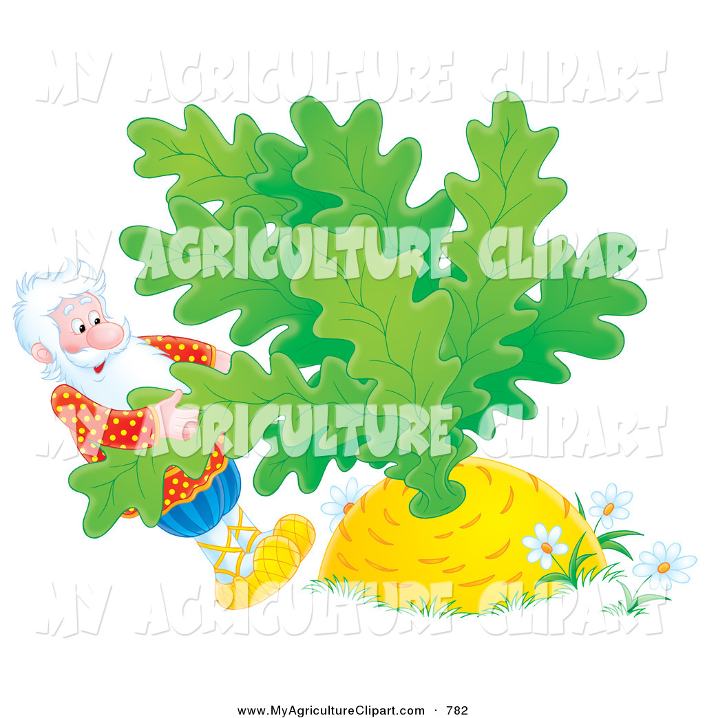 Agriculture Clipart of a Man Trying to Pull a Giant Yellow Turnip.