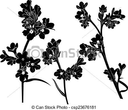 Vector of Pulmonaria officinalis csp23676181.