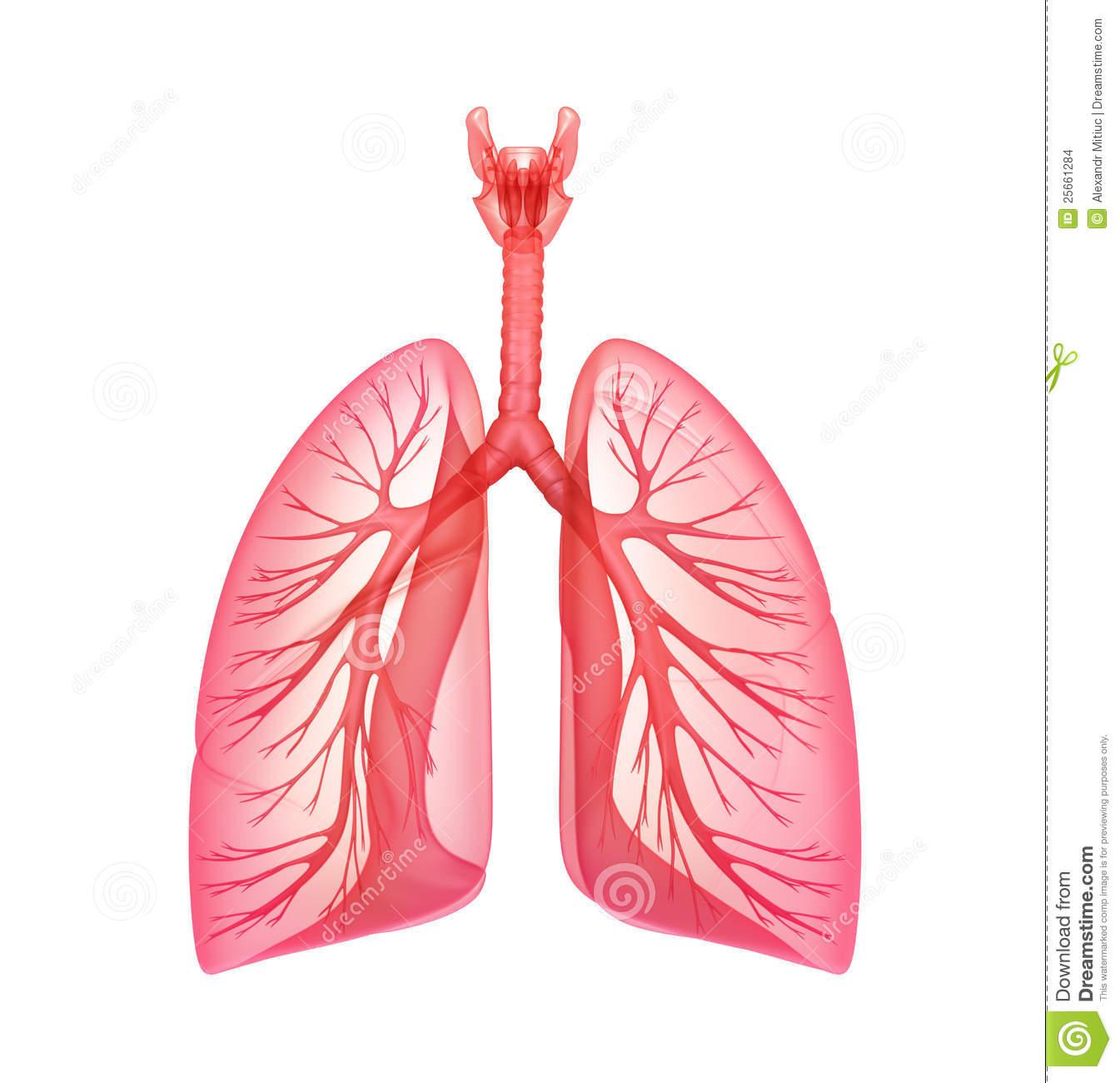 Pulmonary clipart.