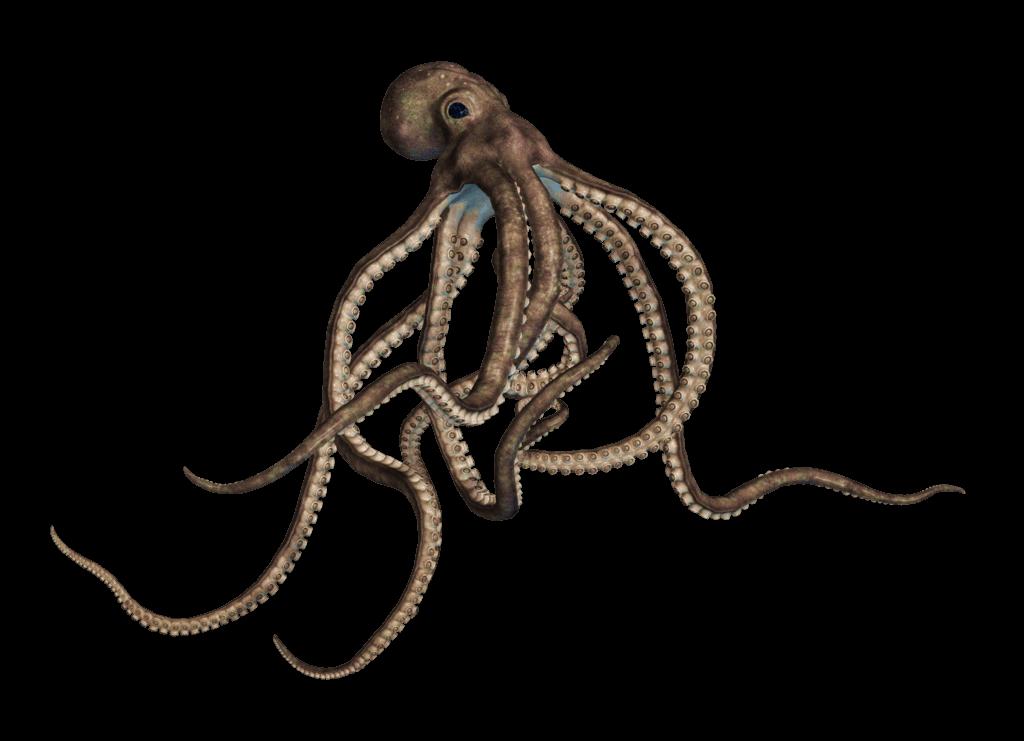 Octopus Large Grey transparent PNG.