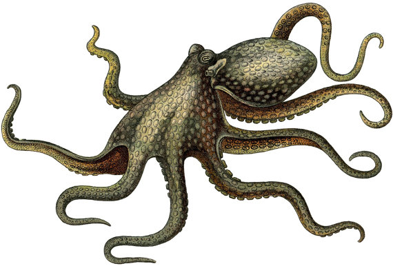 Digital Image Download PNG Image Octopus Haeckel Gamochonia.