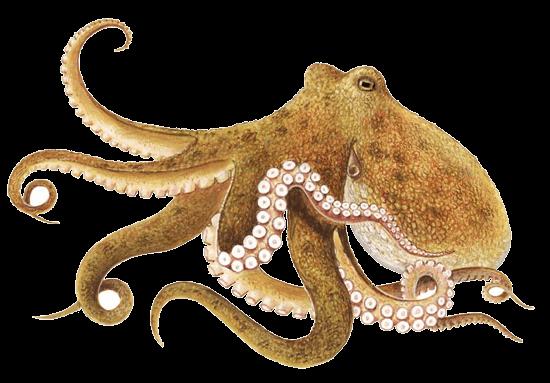 Octopus Brown transparent PNG.