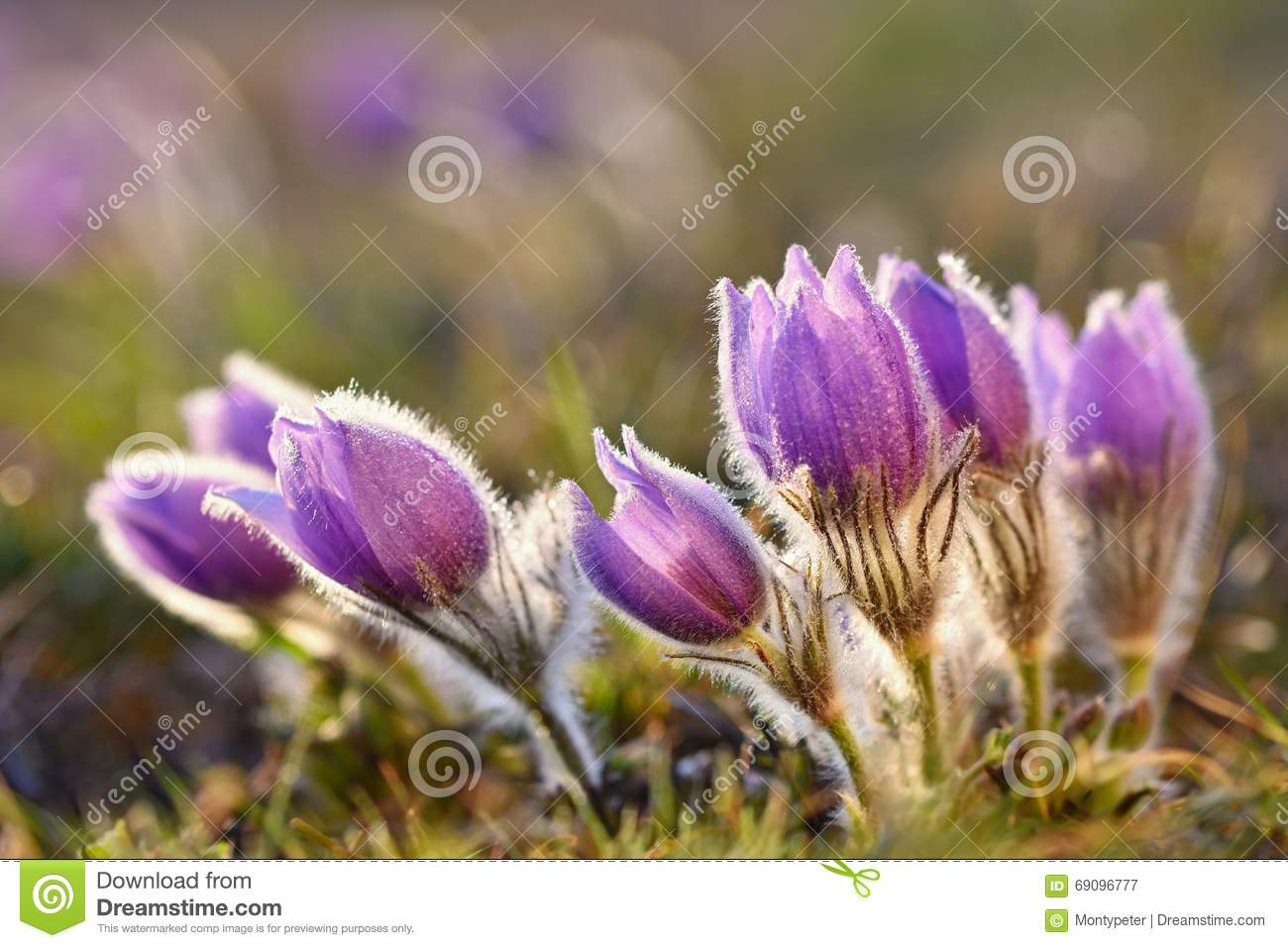 Beautiful Blooming Spring Flowers. Natural Colored Blurred.