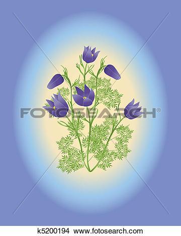 Clipart of anemone pulsatilla vulgaris k5200194.