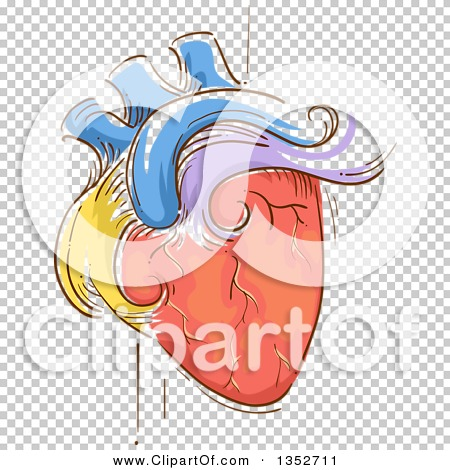 Clipart of a Sketched Colorful Human Heart Pulsating.