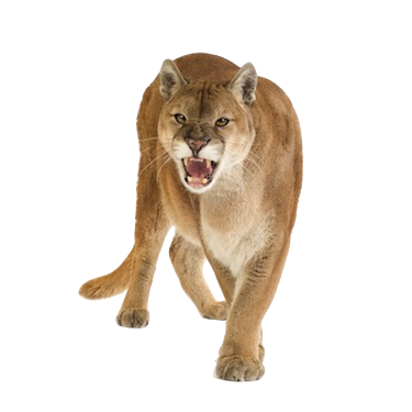 Download Free png puma animal png Buscar con.