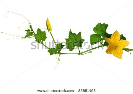 Pumpkin Clip Art Flowers.
